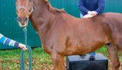 pferde-chiropraktik