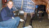pferde-sehnenultraschall